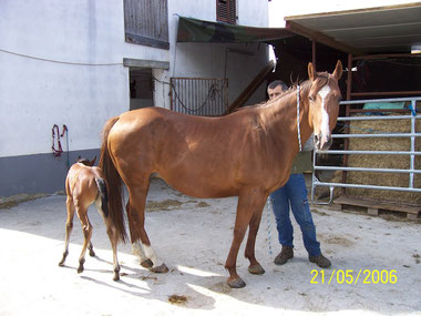 City Blue Quarter-Horse