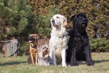 Photo d'uun groupe de chiens