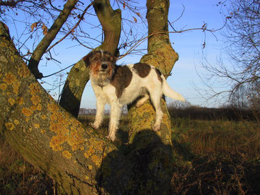 Ayke auf ihren Stammbaum