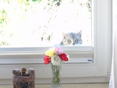 ..manchmal guck ich raus - manchmal guck ich rein, so wie hier...Quelle: www.lichtwesenfotografie.com