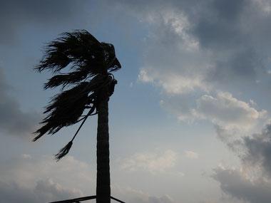このヤシの木の傾きを見ればどれくらい風が強いかいつも見ている人は分かるはず!!