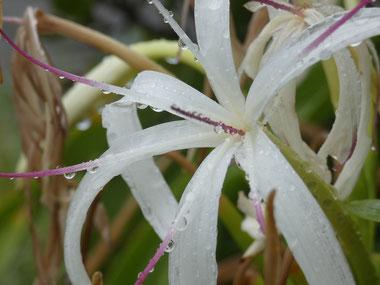 水も滴る カワイイお花。