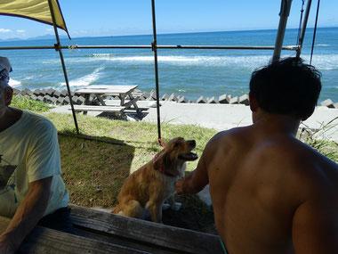 今日はワンちゃんもお盆休みで海へ~ よかったね。