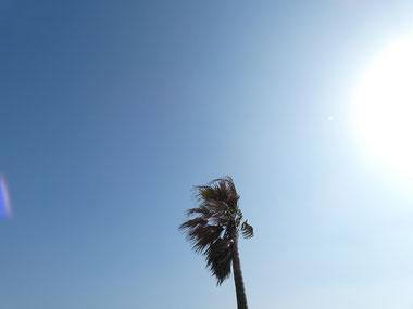 今日も青空です。しかしPM2.5で霞ぎみ。