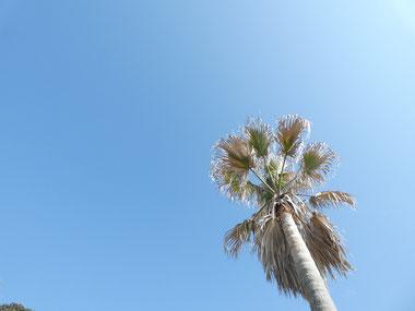 今日は黄砂なのか少し霞み気味な空でした。