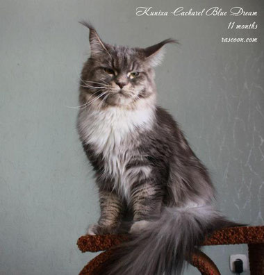 Kuniza Cacharel Blue Dream 11 months