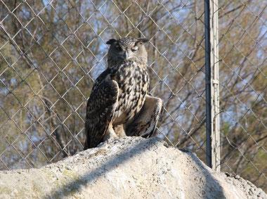 Bild: Eule im Parc ornithologique de Pont-de-Gau