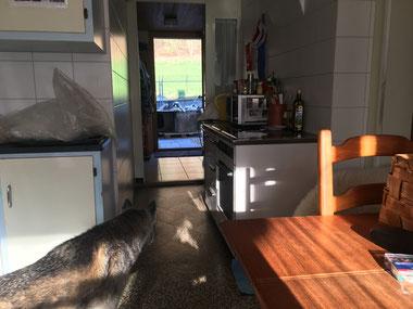 Blick durch die Küche hindurch ins Entreé, bis ins Gehege.
