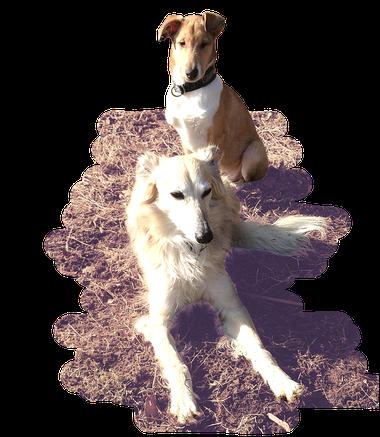 Dundee und Enya - Hundebegegnungen