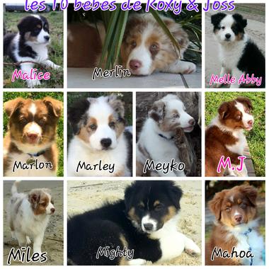 Melle Abby, Malice, Marlon, Mahoa, Meyko, Merlin, Miles, M.J, Marley et Mighty Soleil de la Côte d'Argent
