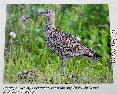"""Bildausschnitt aus der Geo-Park-Tafel, stationiert am NSG """"Weschnitzinsel"""""""