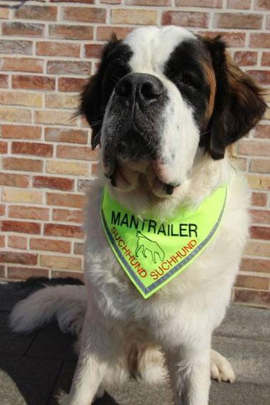Mantrailer, Mantrailertuch. Halstuch, Hundehalstuch, Suchhund, Fährtenhund, Mantrailing