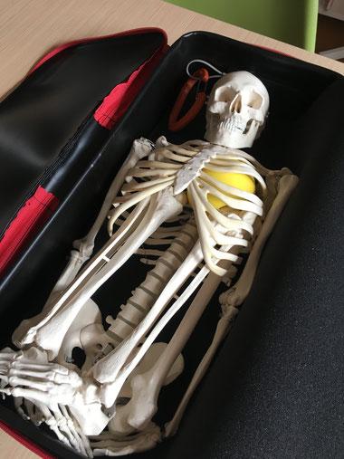 専用キャリーバッグ、開けたらびっくりですね!