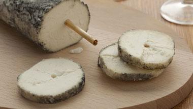 degustation-vin-fromage