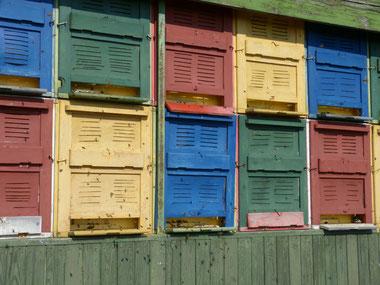Am Bienenwagen fliegen die Bienen eifrig ein und aus, um viel Honig zu sammeln, den wir in unserer Imkerei auf dem Ökohof Fläming zum Ende des Frühjahrs ernten können. Die Bienenvölker sind gut ausgewintert und bereiten ihre Bienenstöcke nun vor.