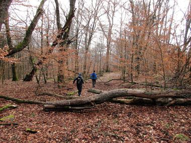 Trailrunning Wiesbaden Hohe Wurzel Schläferskopf