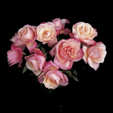꧁ ©Robert Mapplethorpe, Roses, 1988 ꧂