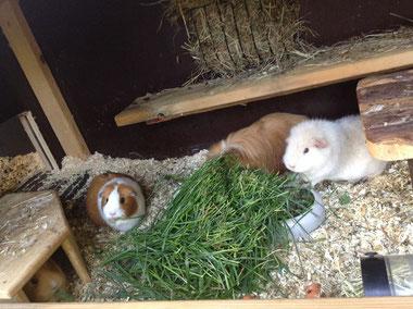 Amely, Sheila und Silly