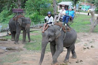 象にゆられて