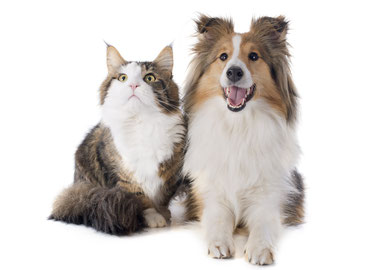 Vasca Da Bagno Per Cani Prezzi : Toelettatura a domicilio per cane e gatto a milano monza e
