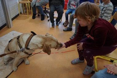 Moon ist eine dreijährige Labradorhündin. Mit ihrem Frauchen Heike Kern-Kiesbauer kommt sie ein bis zweimal pro Woche in die Schule. Die Prüfung zum Schulhund hat sie erfolgreich absolviert.