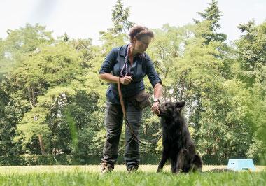 gedragsbegeleiding hond