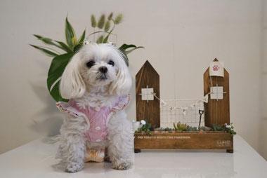 ワークショップ 犬連れ 多肉植物