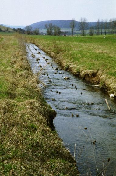 begradigt, fehlender Gewässerrandsteifen, Nutzung bis an die Böschungsoberkannte und fehlende Ufergehölze