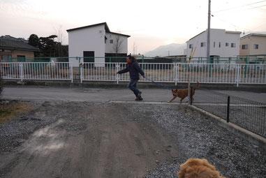 走り抜けるお散歩マン!!てつが後ろにいる~!