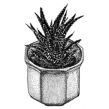 nina georgiev illustration cactus