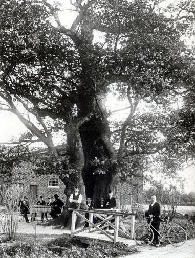 Hohle Eiche in Egenbüttel um 1920