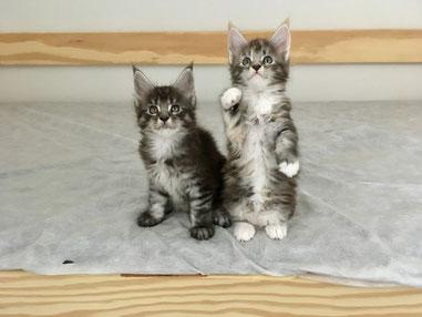 Petit Prince et Penny Lane