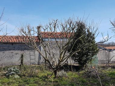 comment tailler un arbre fruitier taille de fruitier saint gaudens lannemezan