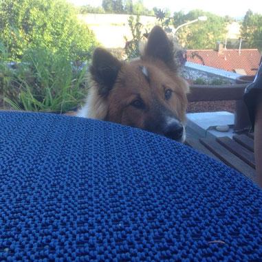 Benito schaut im sitzen locker auf den Tisch