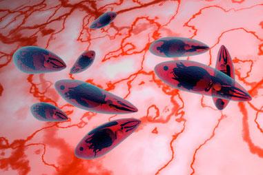 Toxoplasma gondii: Gefährlicher bzw. heimtückischer Verstandes-Parasit (Einzeller), der sich im Gehirn einnistet, das Gehirn manipuliert, dort die Steuerung übernimmt und ein inuitives unbewusstes Programm der Selbstzerstörung schreibt