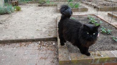 Pas facile de jardiner avec Bouly dans les pattes