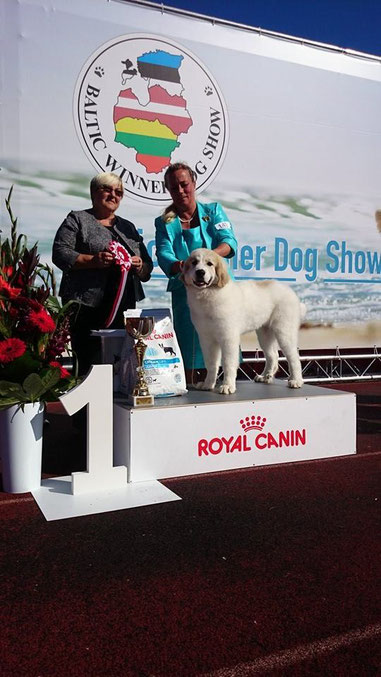 Baltic Winner 2015 International show Best in Show Baby Puppy - Echo de'Chien Escuda pour Garcon