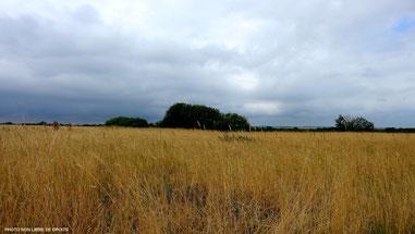 En gris et jaune paille, Baie de Somme