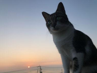 我が家の外猫。イリコちゃん♪ ニャンセットが似合うね~