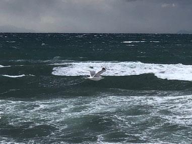 今日は後半風から風が吹きジョナサンも低空飛行。