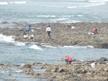 海を見て右は牡蠣採り