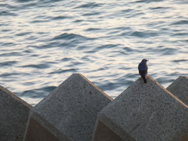 鳥も夕日に見入るのかな・・