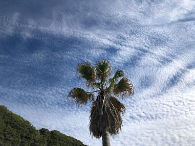 今日は雲が見上げる度表情が違いました。