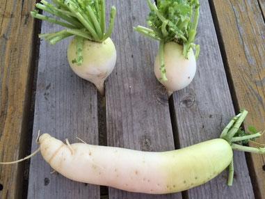 Smile! HMちゃんファームの野菜たち。 いつもありがとーーー♪