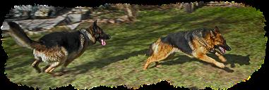 Schäferhund Rettung Tierschutzverein e. V.