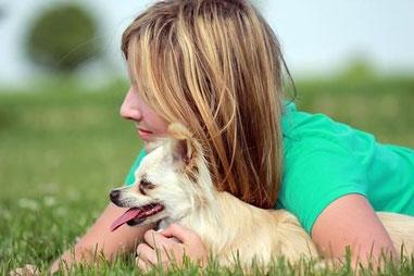 Twaila und Joline auf Chi-Love.de (Deine Geschichte) Chihuahua