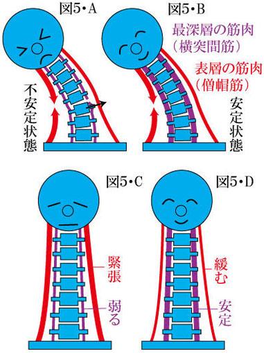 脊椎の動的安定性