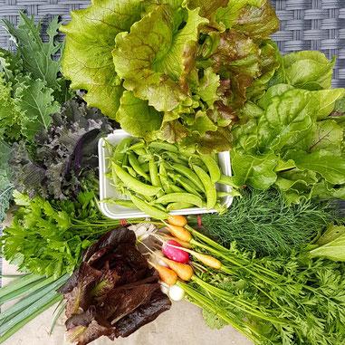 Typisch im Juni: Viel Grünes, Erbsen und die ersten Frühlingszwiebel und Wurzelgemüse