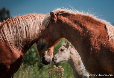 Führungspersönlichkeit, Menschen und Pferde führen, bessere Beziehungen, Ziele erreichen, Erfolg