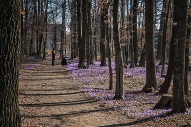 Frühlingsboten in der Weststeiermark